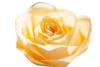 2-rose2